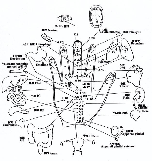 organes-main